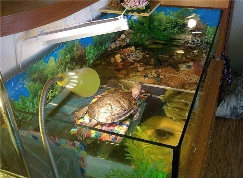 Уход за красноухой черепашками в домашних условиях 119