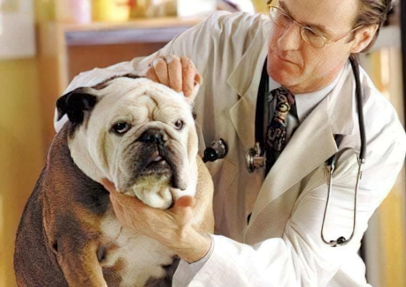 вибрати ветеринара