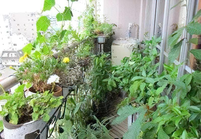 зимовий сад на балконі