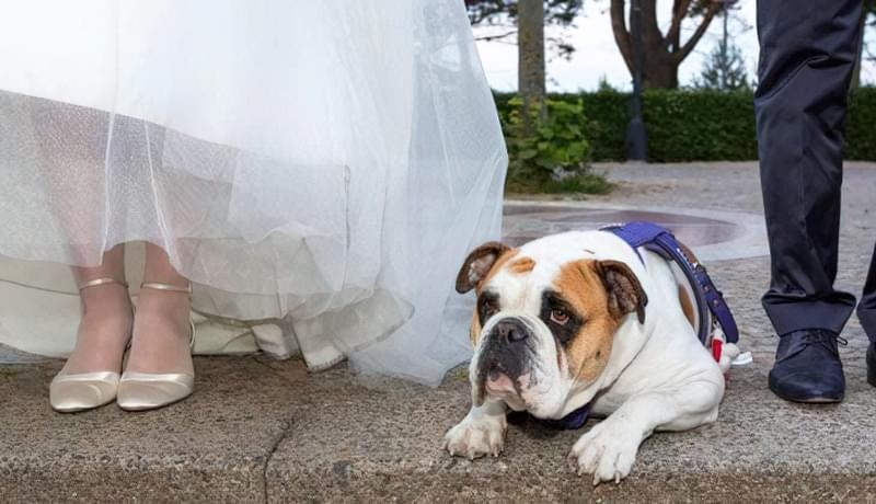 речі непотрібні на весіллі