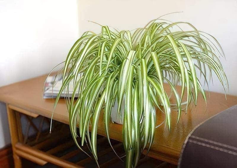рослини очищають повітря