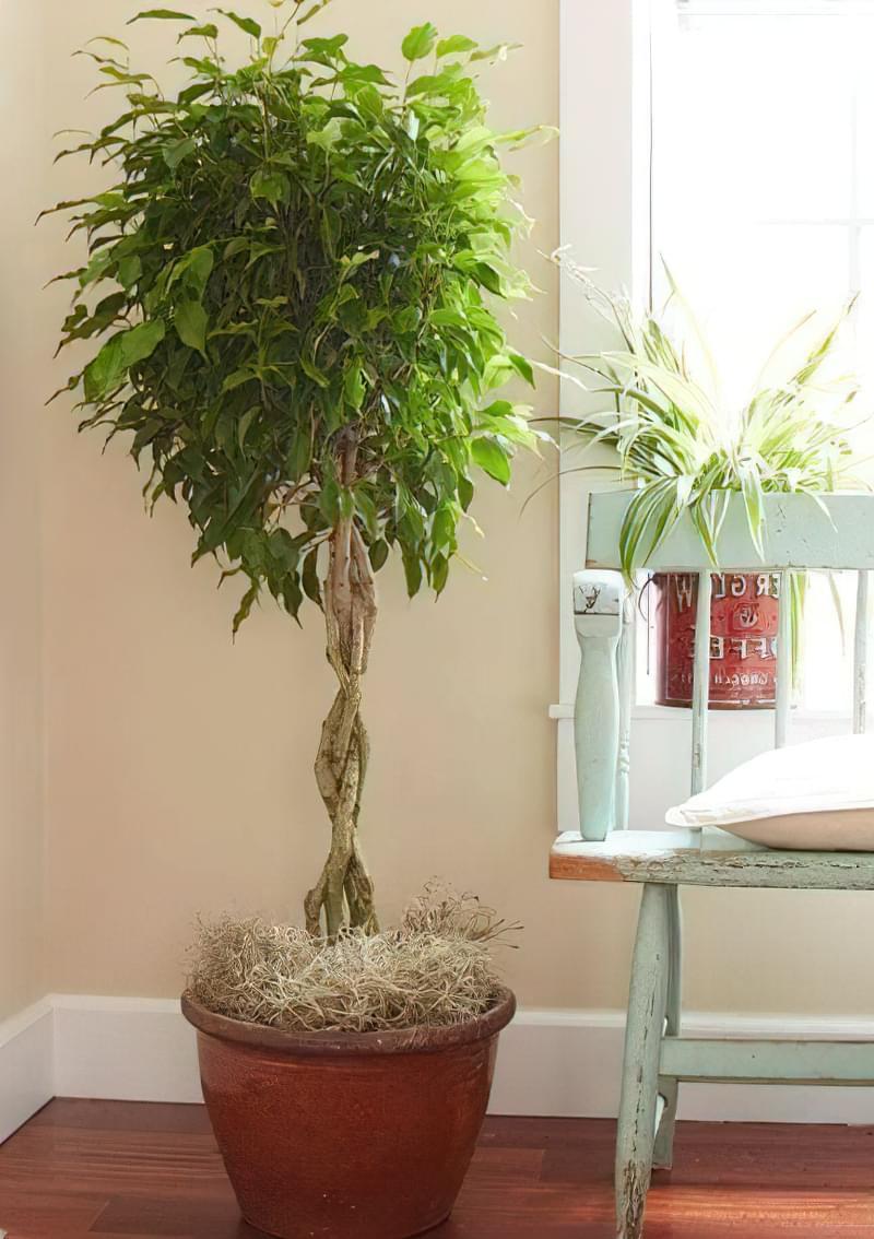 рослини очищають повітря в квартирі