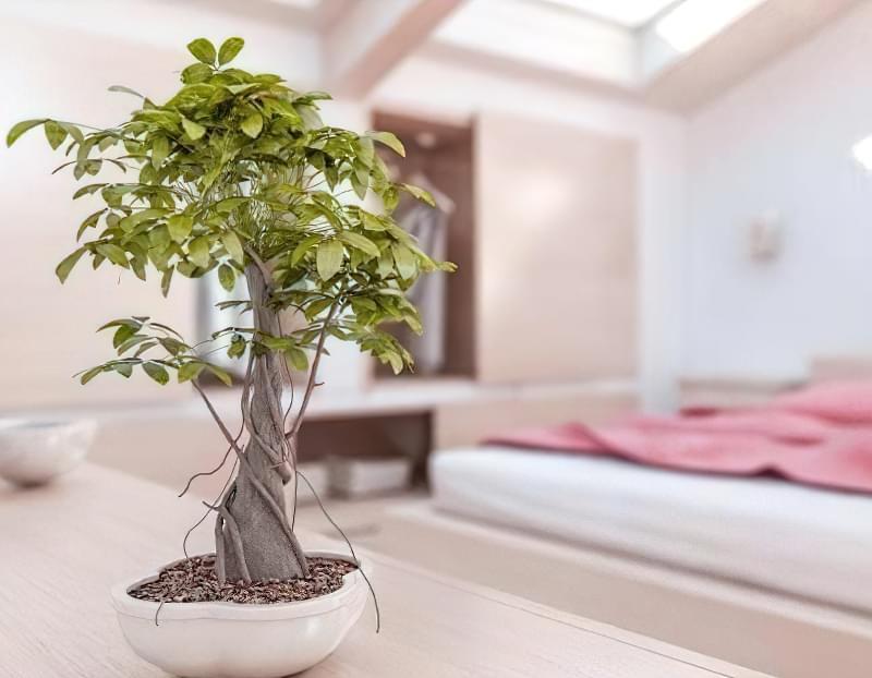 кімнатні рослини по фен-шуй