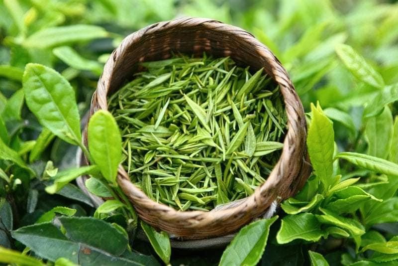 Зелений чай фото