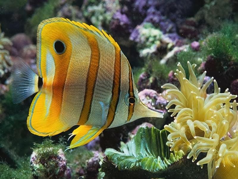 У світі тварин: огляд кращих зоопарків планети 2