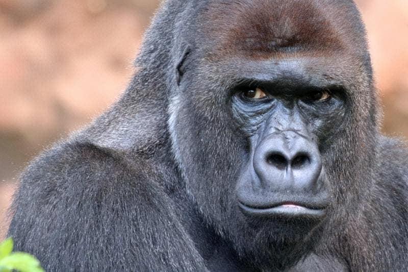 У світі тварин: огляд кращих зоопарків планети 4