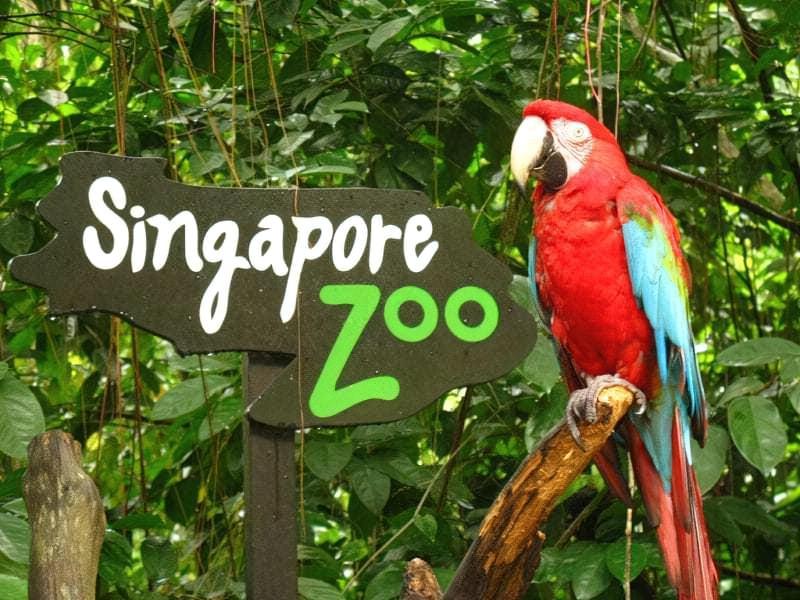 У світі тварин: огляд кращих зоопарків планети 5