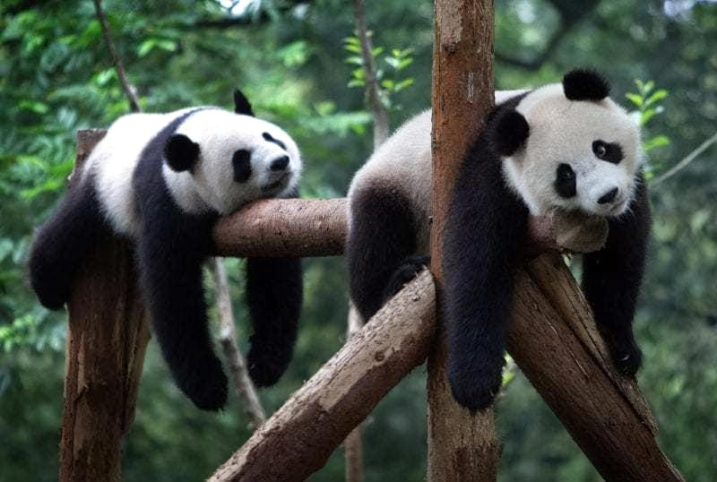У світі тварин: огляд кращих зоопарків планети 6