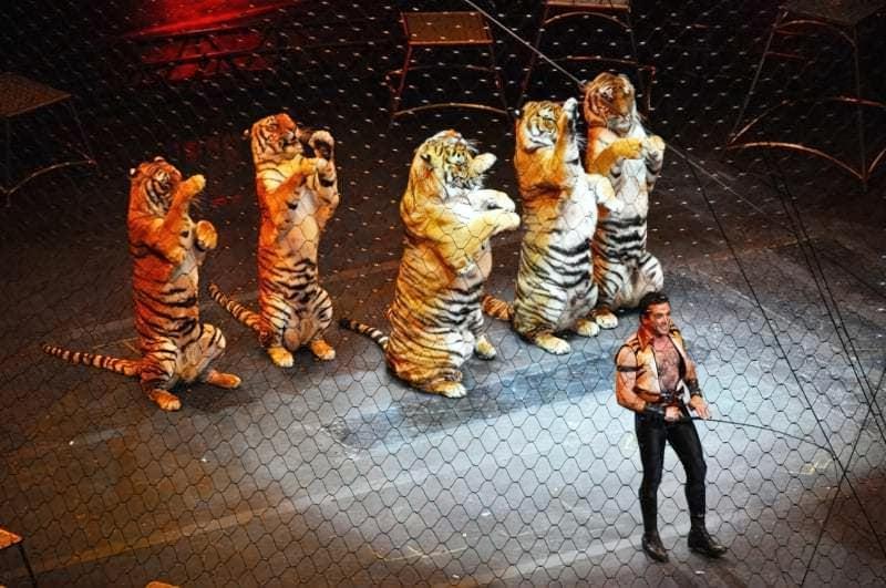 Тигри на арені