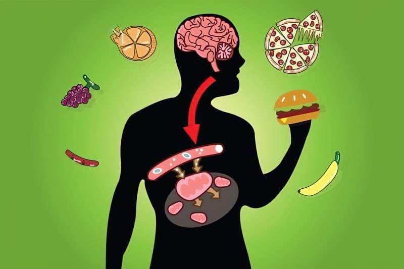 Вплив пробіотиків на здоров'я 2