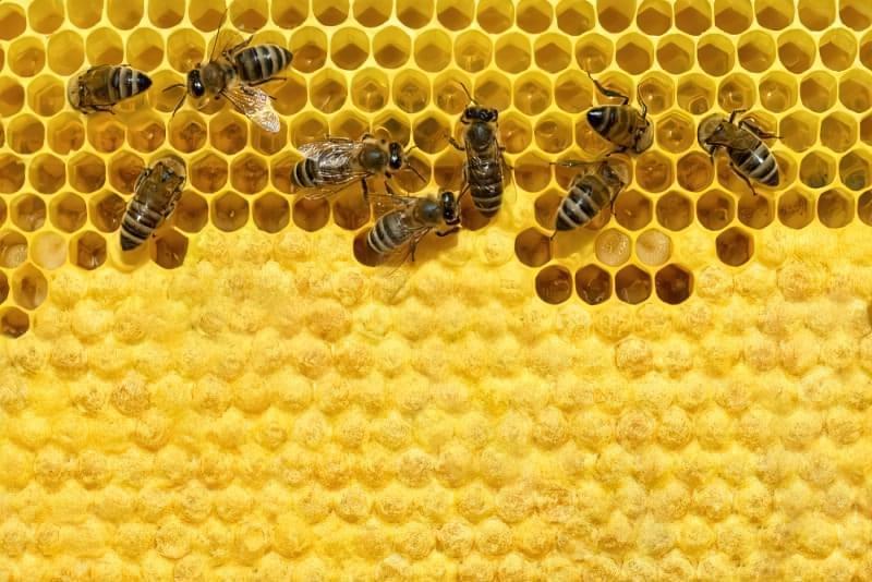 З чого роблять мед, і наскільки він корисний? 2