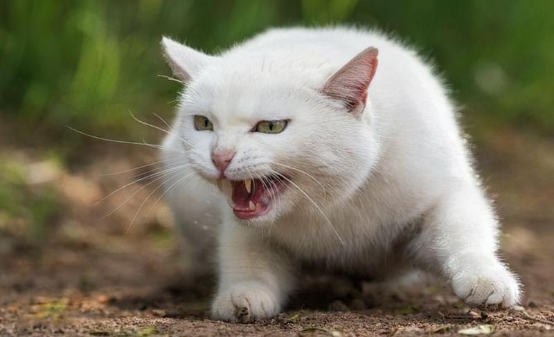 Прямий погляд може налякати кішку і вивести на агресію