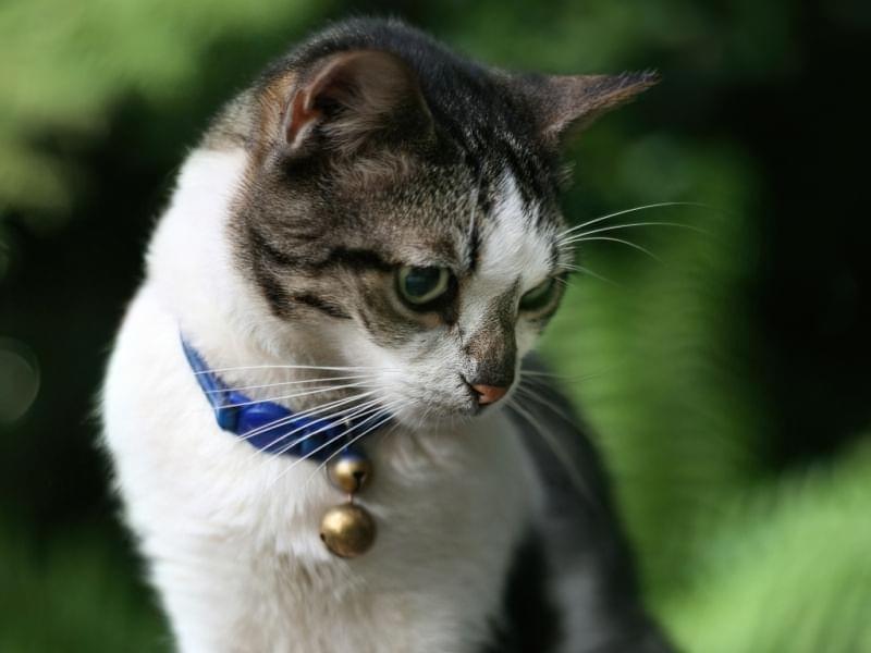 Navishho kotu nashyjnyk i yakyj krashhe vybraty 1