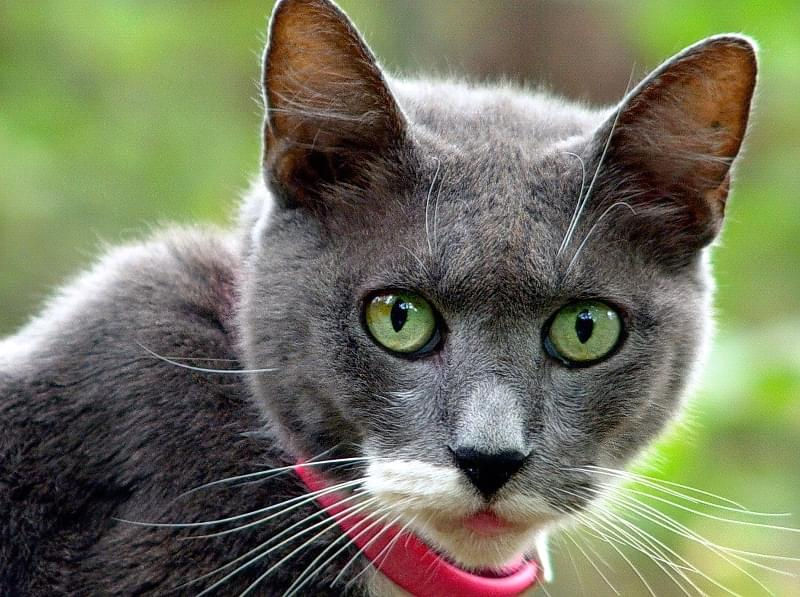 Navishho kotu nashyjnyk i yakyj krashhe vybraty 4