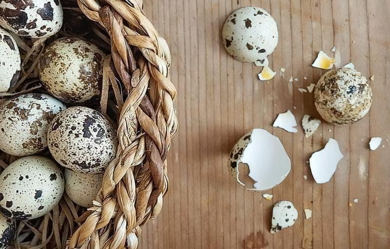 Шкаралупа яєць перепілки — для лікування опорно-рухового апарату