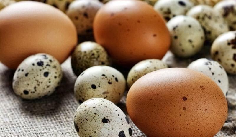 Невелике перепелине яєчко містить дуже багато вітамінів і мікроелементів