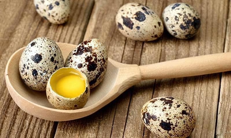 Перепелині яйця — джерело корисних речовин